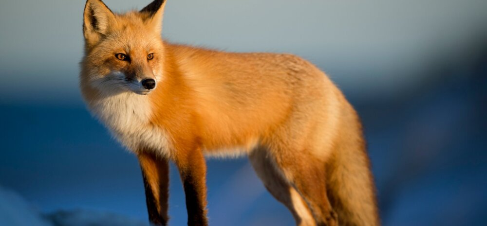 Eestlase algatusel astuvad blogijad üle maailma loomade kaitseks välja