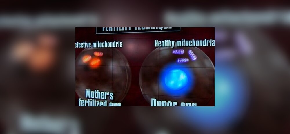 Kolme vanema lapsed? mtDNA asendamine pole katseklaasiviljastamisest oluliselt erinev