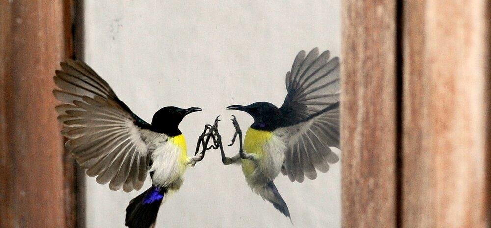 Птица ударилась в окно и улетела: приметы