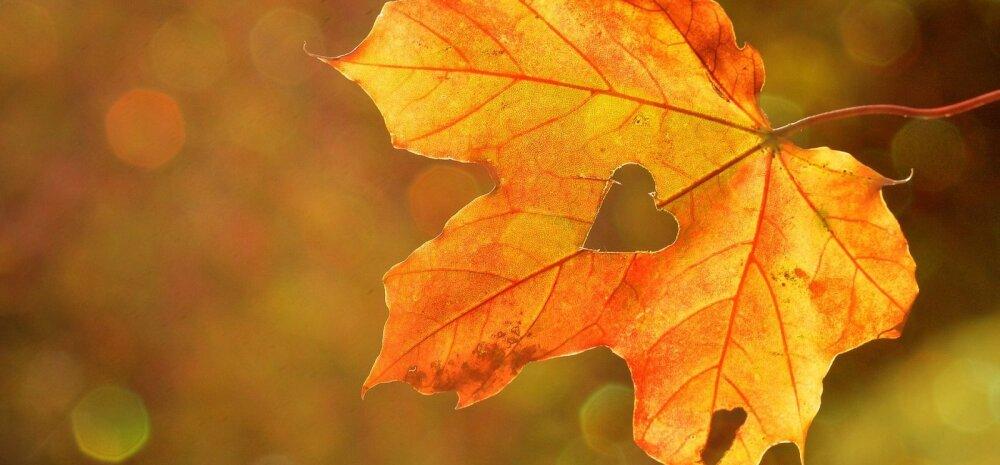 Почему листья осенью желтые и красные?