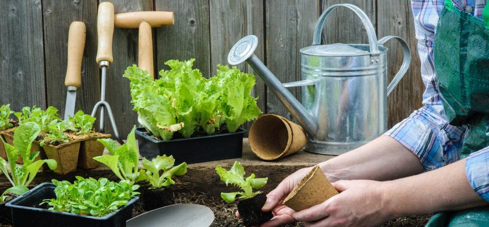 Varakevadised aiatööd, mida kindlasti unustada ei tohiks