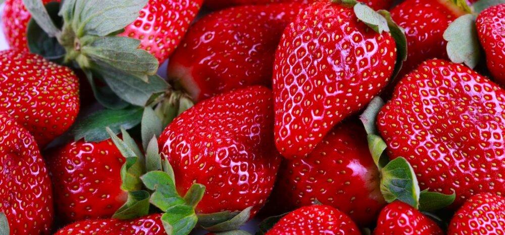 Prisma sügavkülmutatud maasikapartiisse sattus loomne lisand