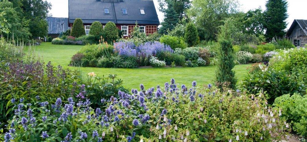 2400 nimetust püsililli — aed, kus miski pole juhuslik
