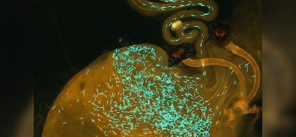 TEADUSFOTO: Spermatosoidide sõda. Mõne liigi puhul vägagi vihane