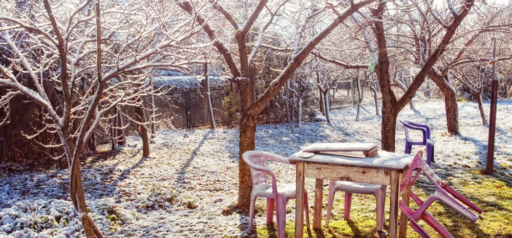 Зимний сад: предупреждаем и исправляем повреждения