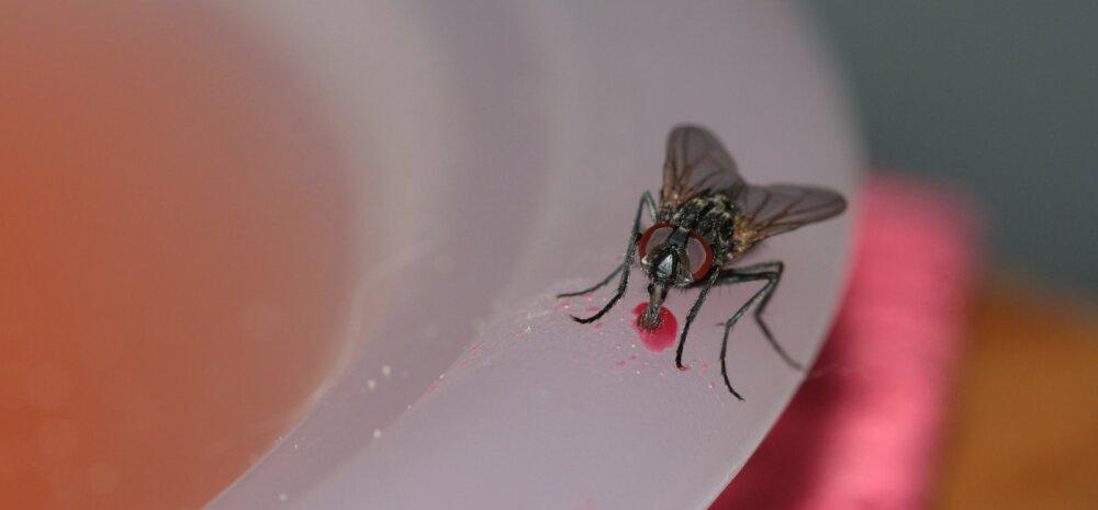 Уберите это! 13 вещей, которые привлекают в ваш дом насекомых
