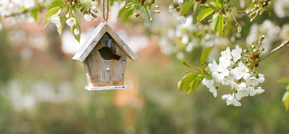 Paigalda aeda lindudele pesakast — häid nippe ja nõuandeid!