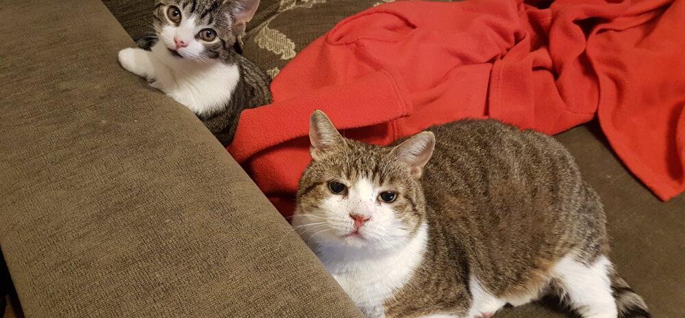 Kass, keda keegi ei tahtnud: kaks aastat oma kodu oodanud Käps saadab tervitusi päris oma kodust