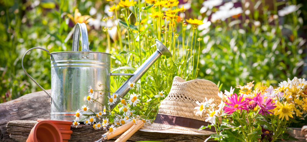 НА ЗАМЕТКУ | Работы в саду и огороде в августе