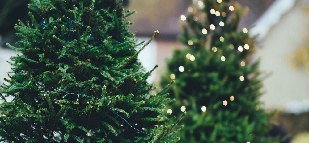 12 секретов, которые нужно знать при покупке новогодней елки