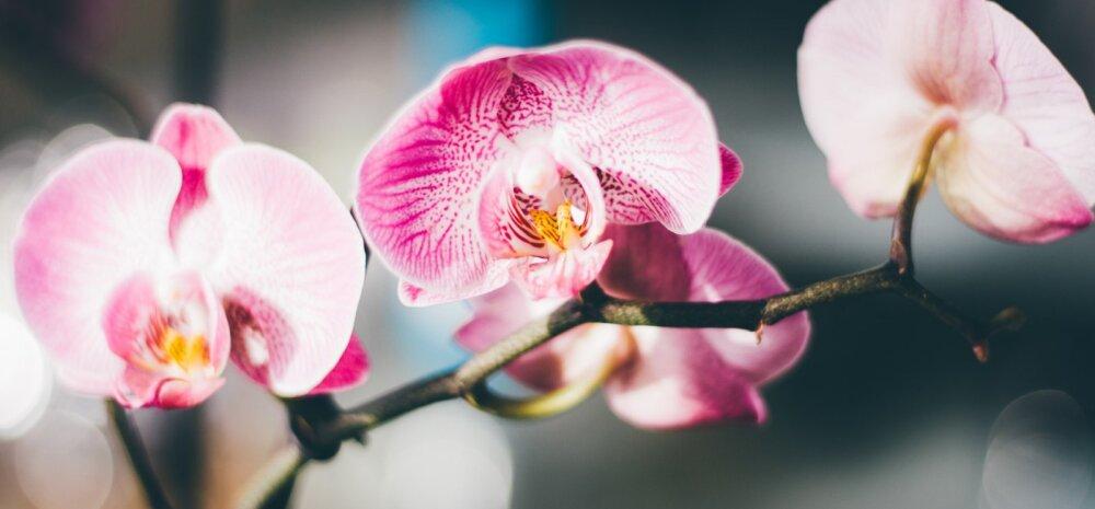 Не держите цветок в спальне, или Приметы и суеверия об орхидеях в доме