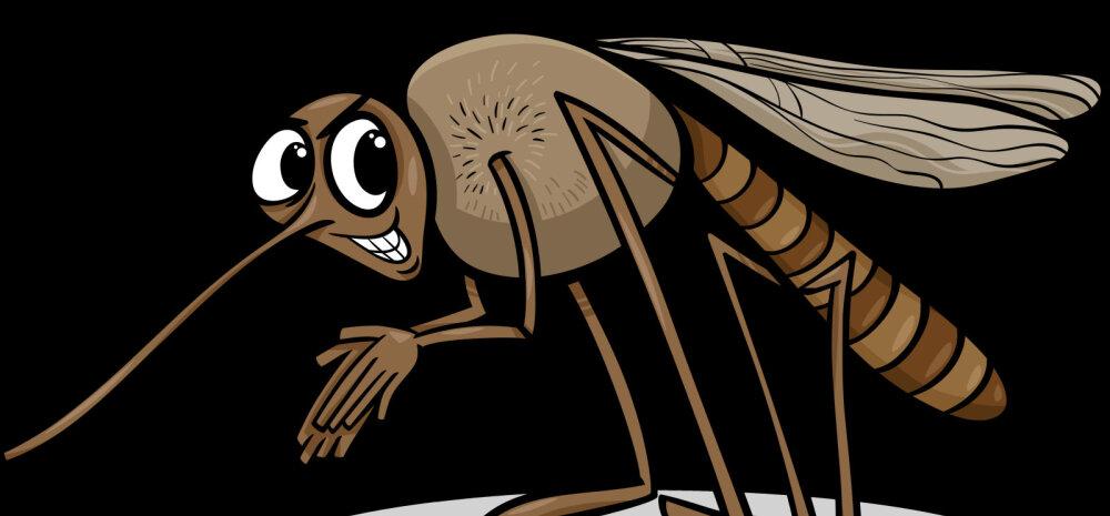 Sääsehooaeg on täies hoos: miks need verejanulised putukad eelistavad mõningaid inimesi teistele?