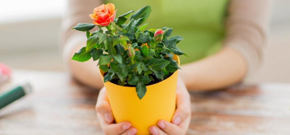 Можно ли брать чужие комнатные цветы: приметы
