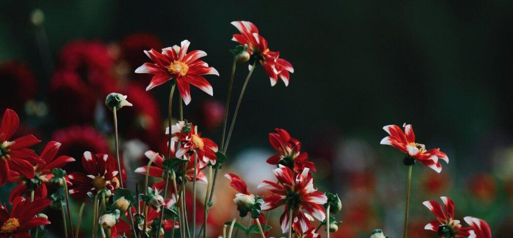 Millised aiatööd tuleb ära teha oktoobris