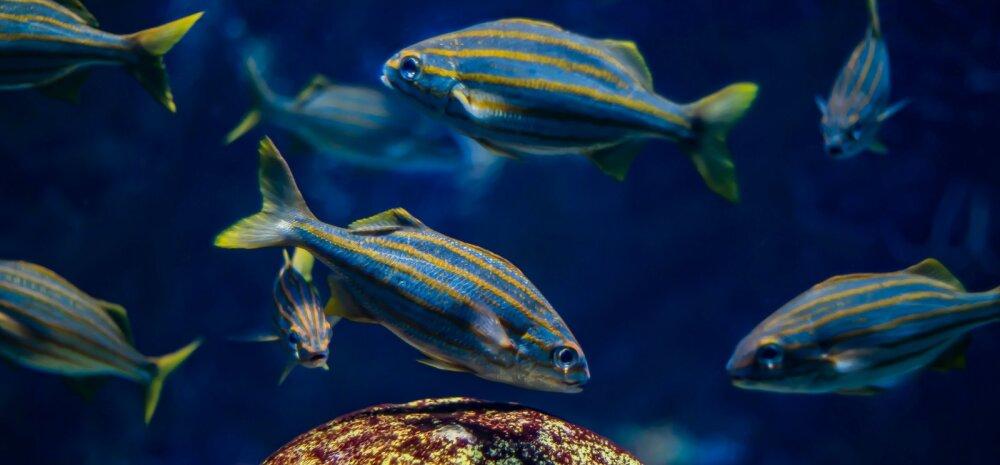 Päikesemärgid: Kalade märgi omaduseks on toetuda tervikutajule ja usaldusele, lastes elul end pea kinnisilmi kanda