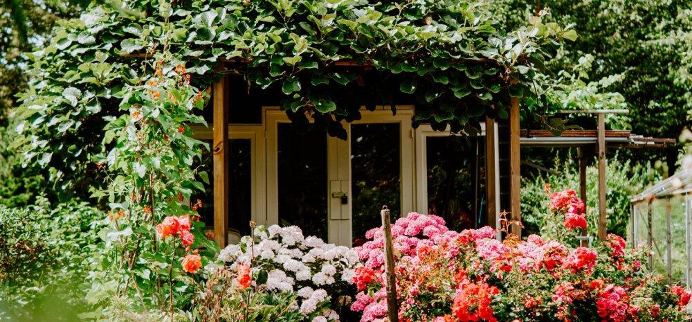 FOTOD | 31 rikkalikult õitsvat aeda — vaata ideid!