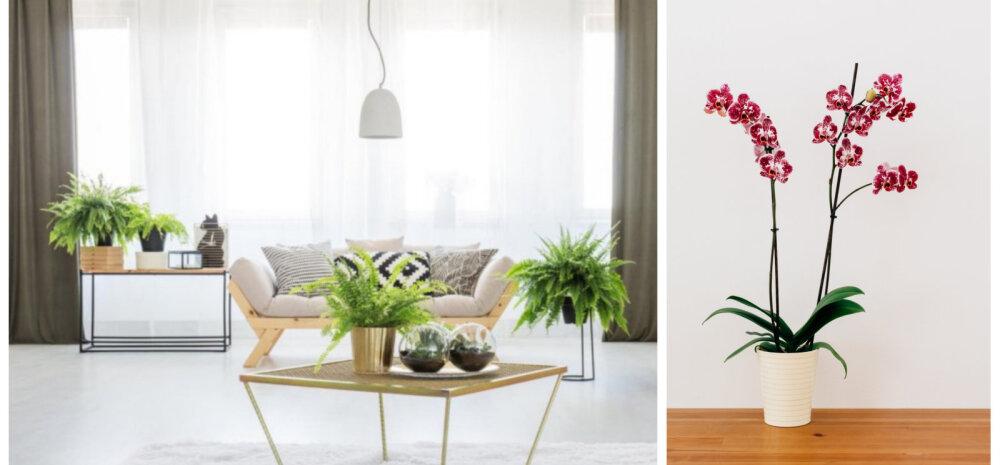 Seitse kasulikku toataime, mis tõstavad tuju