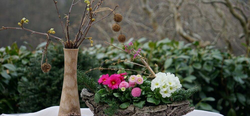 НАШ САД │ Какие цветы можно сеять под зиму?