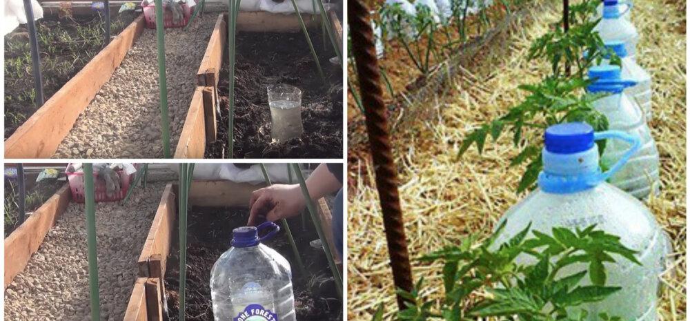 ВИДЕО | Делаем сами: капельный полив из пластиковых бутылок
