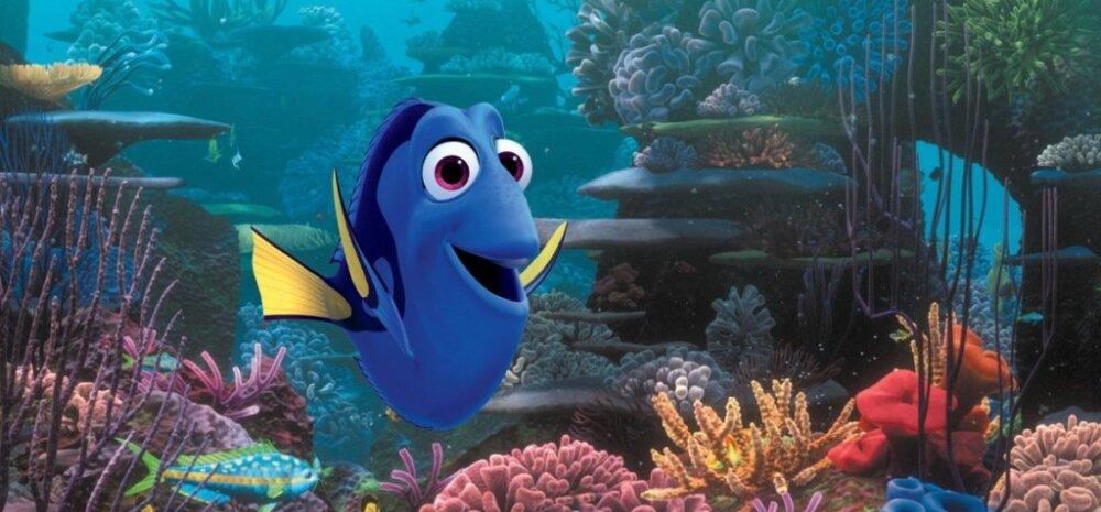 """Mull-mull-mull-mull rõõmustage väiksed kalad: """"Kalapoeg Nemo"""" saab lõpuks järje"""