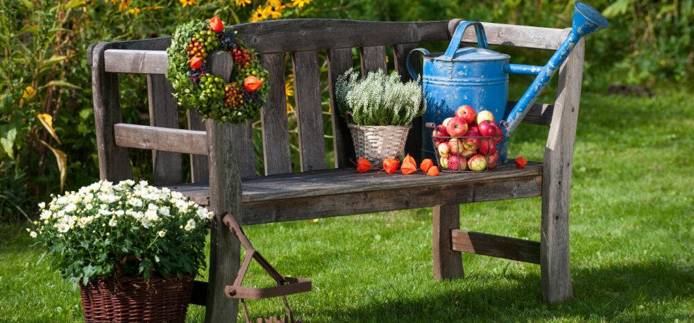 HEA TEADA | Millised aiatööd võtta ette augustis