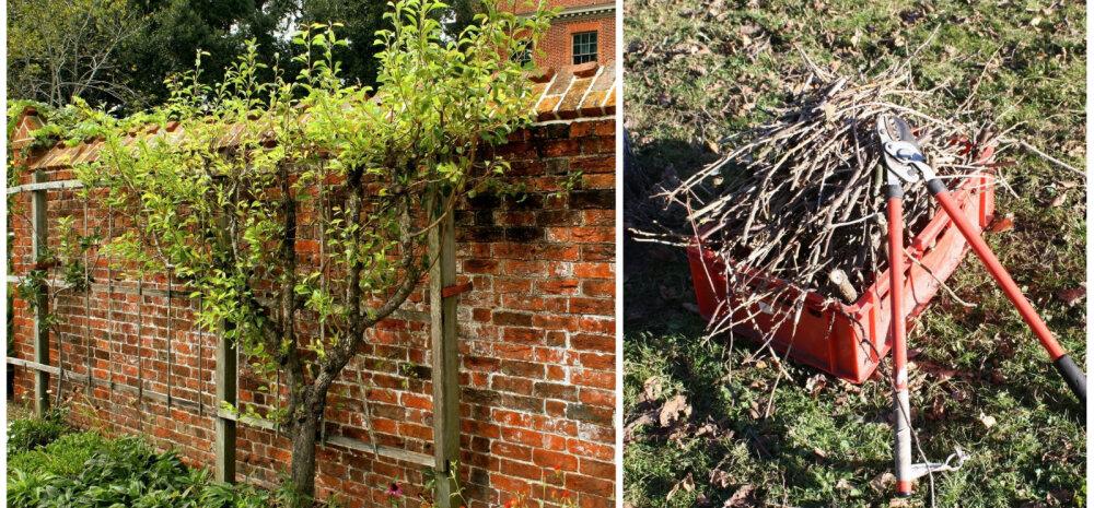 СОВЕТЫ │ Тонкая работа секатором, или Осенняя обрезка в саду — как, что и когда?