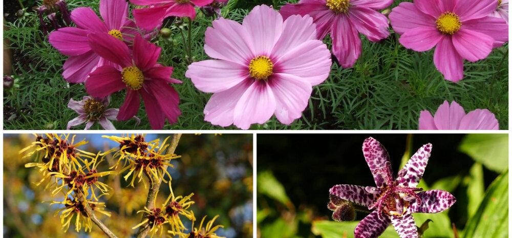Осень не за горами: 15 цветов, которые сделают ваш сад нарядным