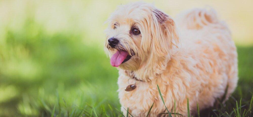 TOP 5 | Põhitõed, millest koera elus ja tema kasvatamisel lähtuda