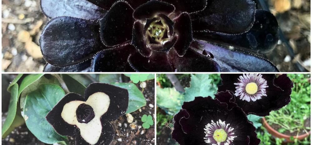 """ФОТО │ Мечта любого гота: """"черный-черный"""" сад знаменитой тату-художницы Kat Von D"""