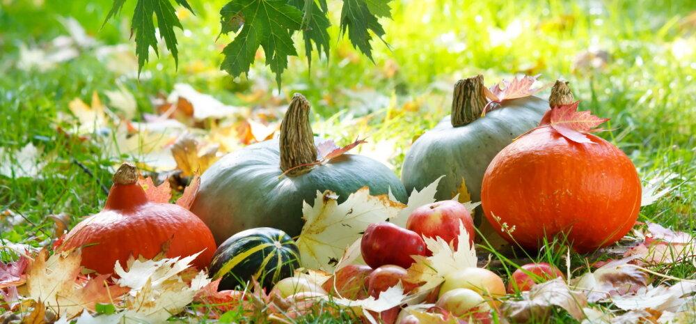 Millised aiatööd tuleks ette võtta septembrikuus?