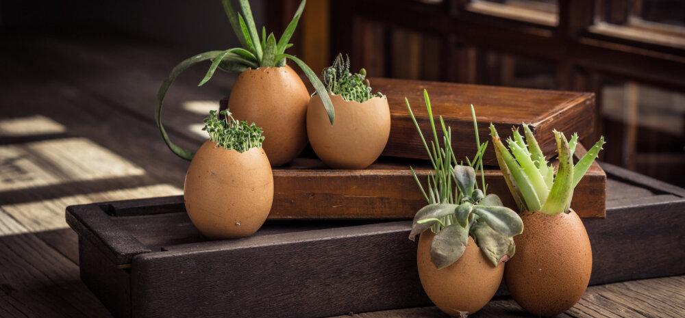 СОВЕТЫ │ Необычные способы выращивания рассады