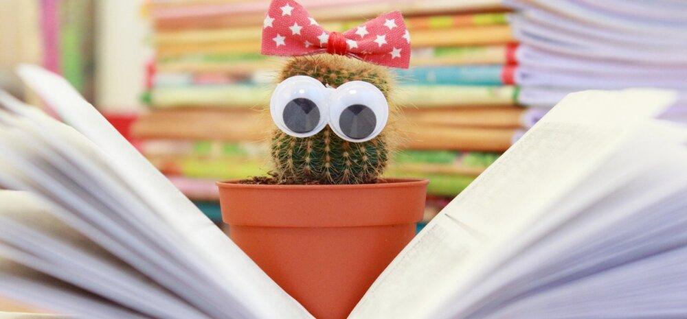 Можно ли держать дома кактусы: приметы