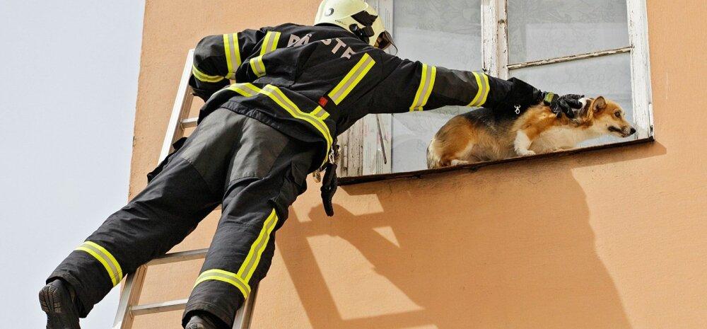 FOTOD: Päästjad tõid Tartus kolmanda korruse aknast välja roninud koera maa peale tagasi
