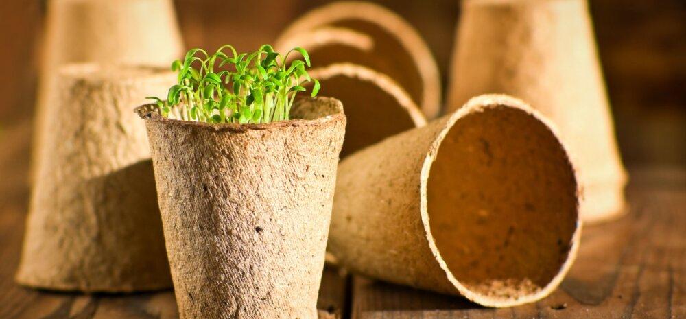 Vahvad ideed, kuidas aknalaual väega toitu kasvatada
