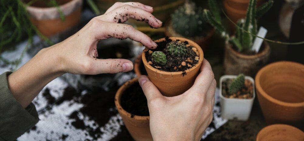 Почему умирают растения в квартире: полный список проблем