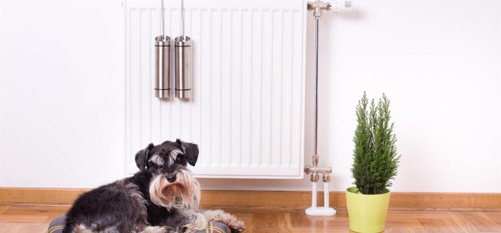 Mida teha, et küttest tingitud kuiv õhk ei kahjustaks tervist, mööblit ja toataimi?