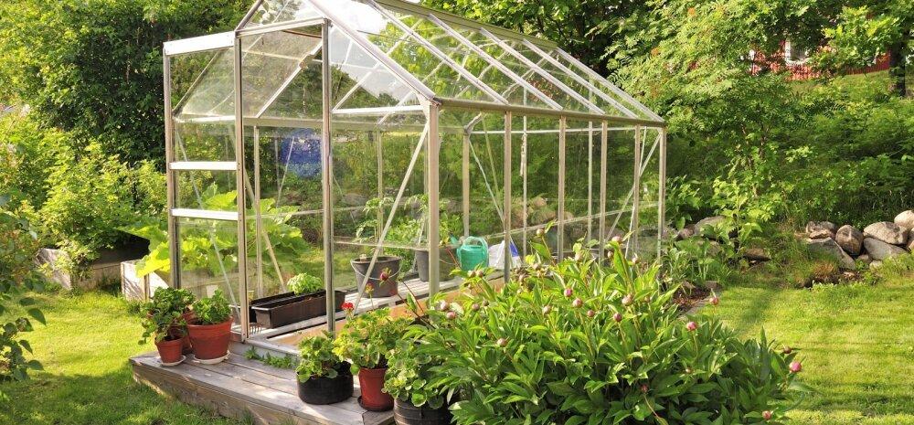 Kuidas vabaneda kasvuhoones pesitsevatest kahjuritest?