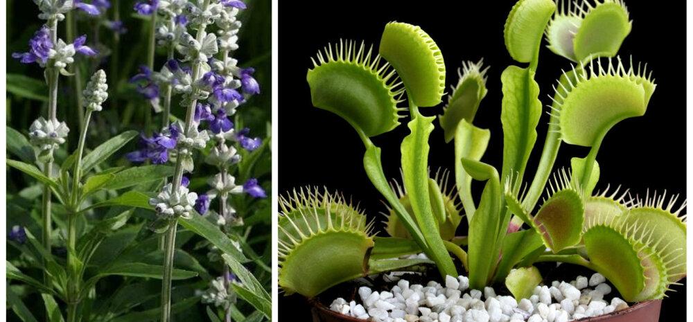 Kuus taime, mis aitavad putukad toast eemal hoida