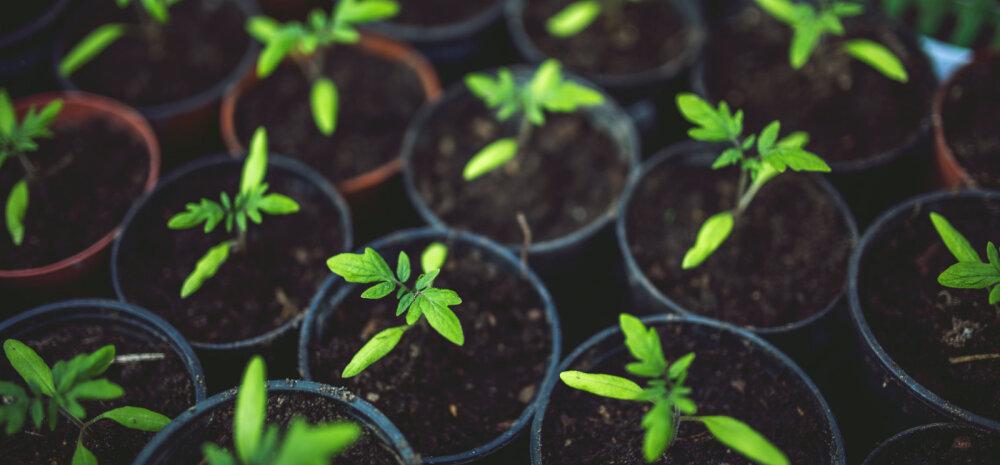 Veebruaris tee algust taimede ettekasvatamisega!