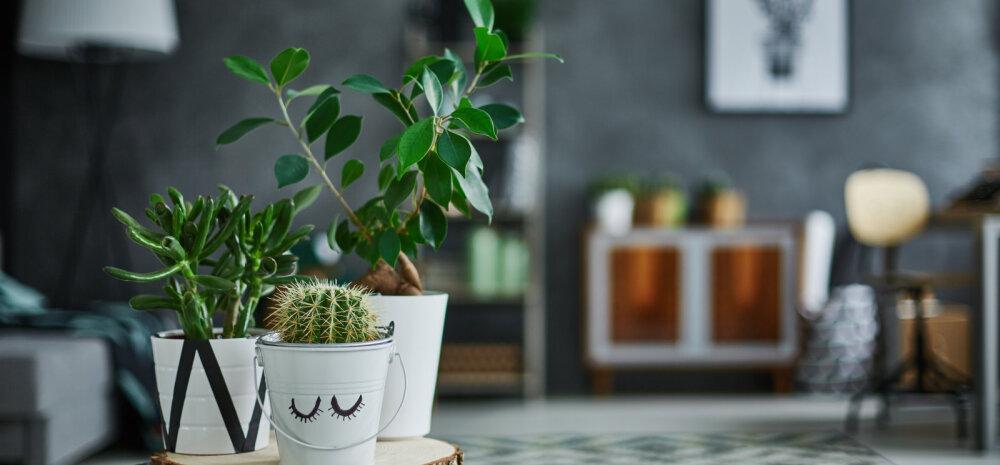 Кому что выращивать? Комнатные растения и знаки зодиака