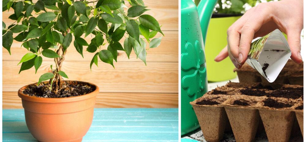13 комнатных растений, которые легко вырастить из семян