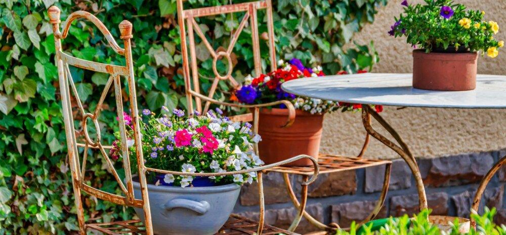 В Хааберсти впервые ищут самый красивый сад района
