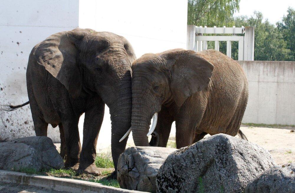 ÜRITUS | Tallinna loomaaed tähistab esmaspäeval elevandipäeva