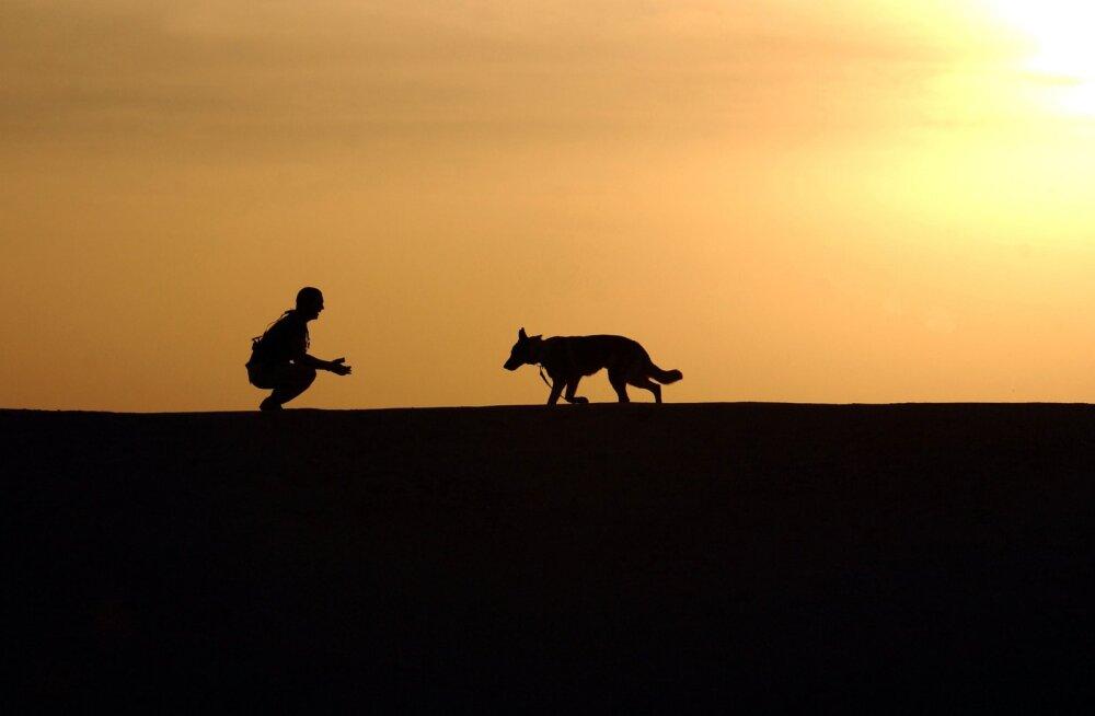 HEA TEADA | Miks ei tohiks kadunud koerale kutsudes läheneda?