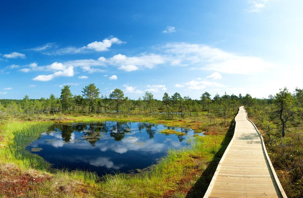 Täna on keskkonnapäev: 17 võimsat tsitaati loodusest