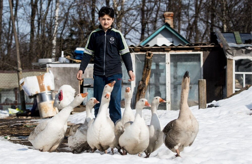 Kolionovos saab krüptorahaga maksta ka selliste hanede eest, keda  see Moskva oblasti külapoiss enda ees ajab.