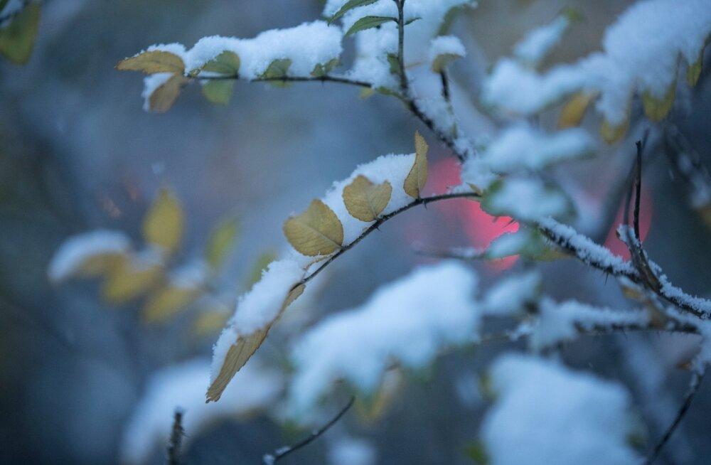 Karge ilmaprognoos: uus nädal toob lumesaju ja kuni viis kraadi külma