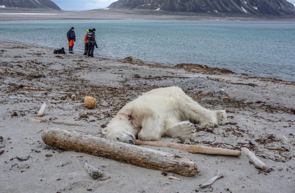 Saksa kruiisifirma sattus pahameeletormi keskele, kuna nende töötaja laskis Teravmägedel jääkaru