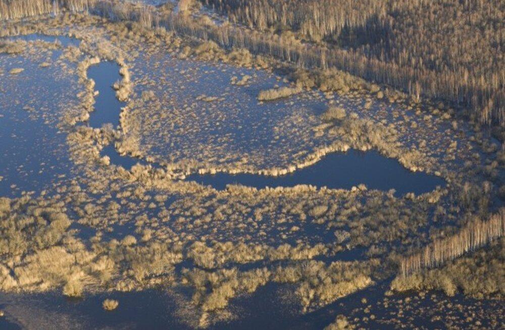 Vaikselt loksuv vesi neis Alam-Pedja vanajõegedes ehk sootides oli kunagi Emajõe mäslev peavool.