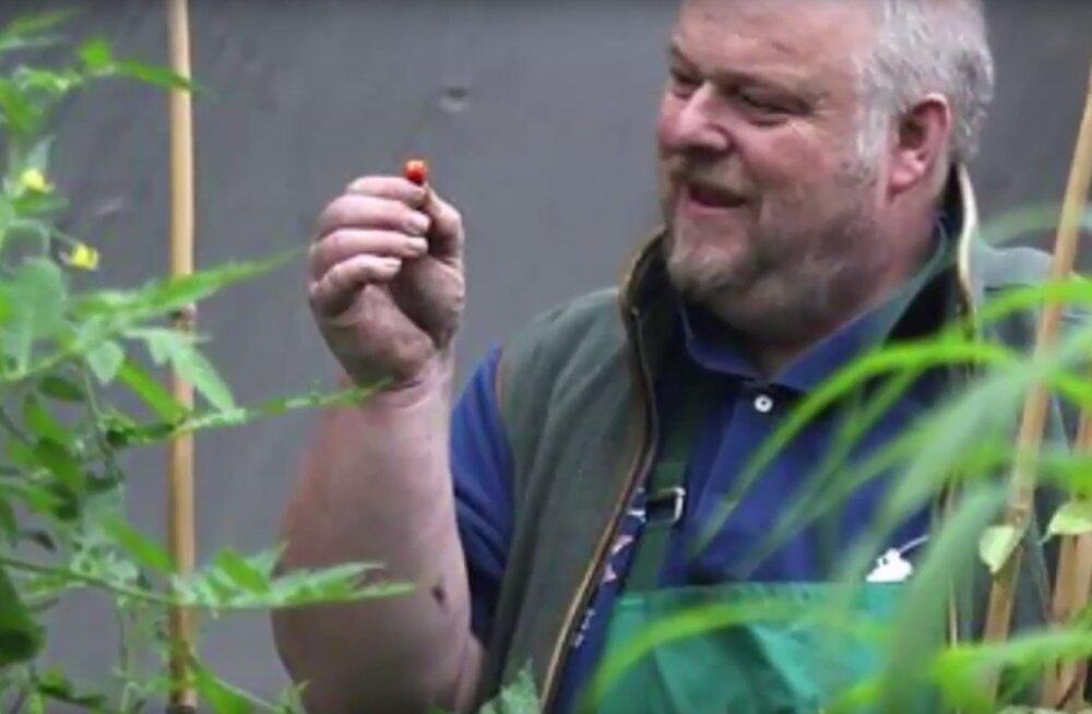 Walesi aednik kasvatas poolkogemata maailma kangeima, lausa eluohtlikult terava piprakauna